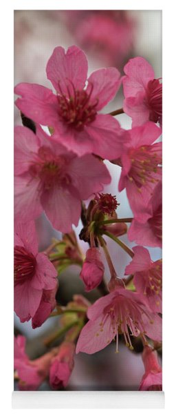 Yoga Mat featuring the photograph Cherry Blossoms by Pamela Walton