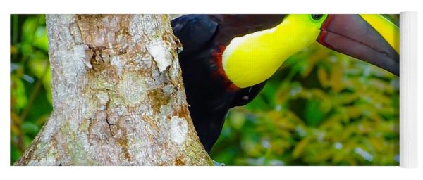 Chestnut-mandibled Toucan Yoga Mat