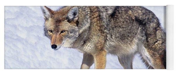 Coyote Canis Latrans Wild California Yoga Mat