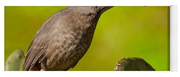 Curve-billed Thrasher On A Prickly Pear Cactus Yoga Mat