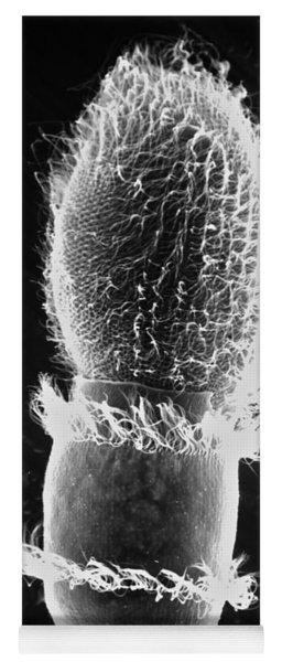 Didinium Attacking Paramecium Sem Yoga Mat