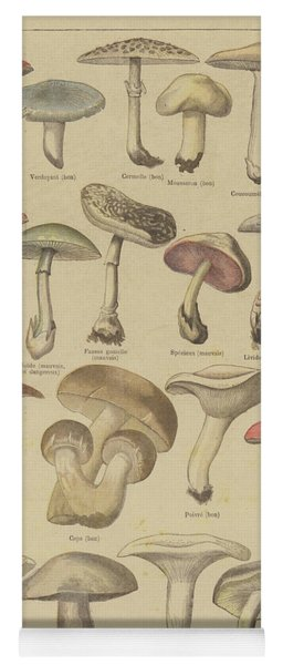 Edible And Poisonous Mushrooms Yoga Mat