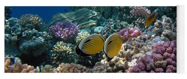 Exquisite Butterflyfish In The Red Sea Yoga Mat