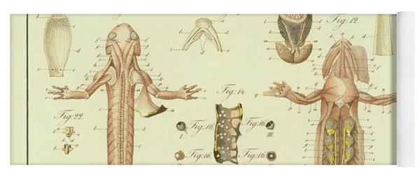 Fire Salamander Anatomy Yoga Mat