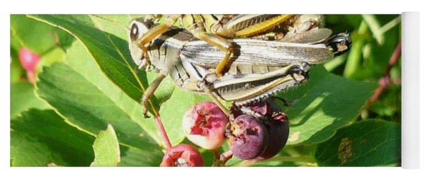 Grasshopper Love Yoga Mat
