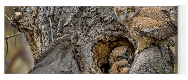 Great Horned Owlets In A Nest Yoga Mat