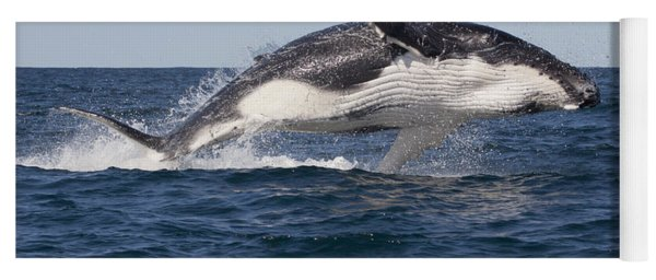 Humpback Whale Calf Breaching Yoga Mat