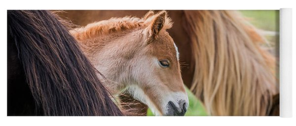 Mare And New Born Foal, Iceland Yoga Mat