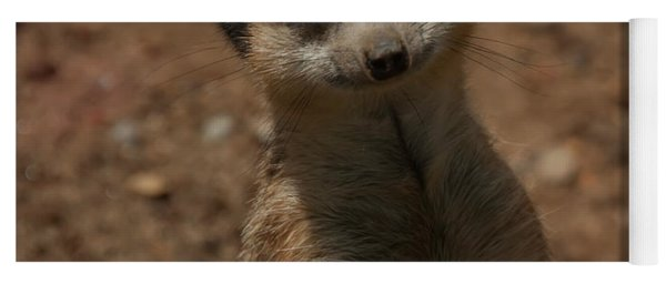 Yoga Mat featuring the photograph Meerkat by Chris Flees