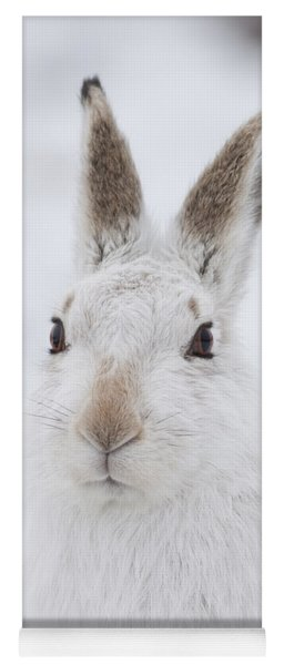 Mountain Hare In The Snow - Lepus Timidus  #1 Yoga Mat