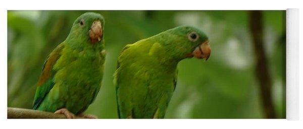 Orange -chinned Parakeets  Yoga Mat