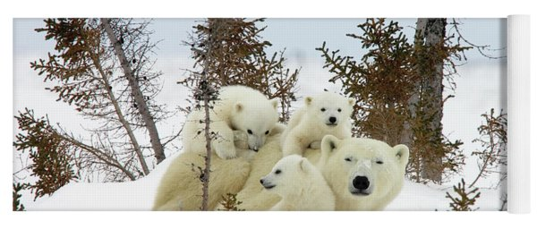 Polar Bear Ursus Maritimus Trio Yoga Mat