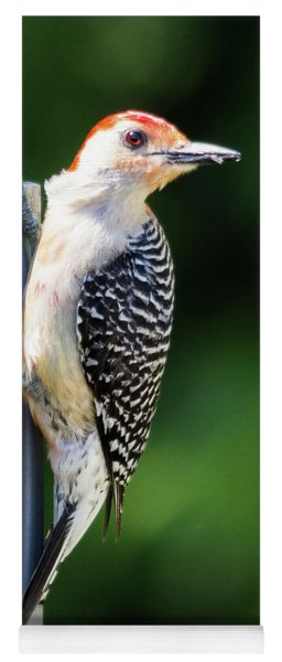 Red-bellied Woodpecker Yoga Mat