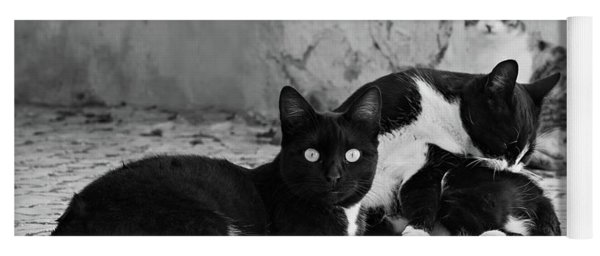 Yoga Mat featuring the photograph Street Cats - Portugal by Barry O Carroll