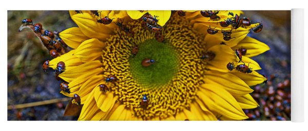 Sunflower Covered In Ladybugs Yoga Mat