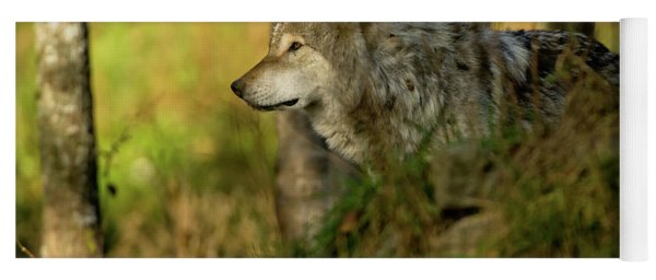 Timber Wolf In Forest Yoga Mat