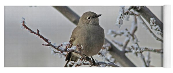 Townsend's Solitaire Yoga Mat