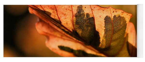 Tri-color Beech In Autumn Yoga Mat