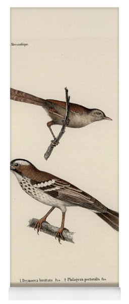 White-browed Sparrow-weaver And Grass Or Bush Warbler Yoga Mat