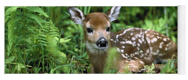 White-tailed Deer Odocoileus Yoga Mat