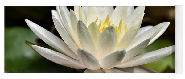 White Water Lily At Farmer Girl Yoga Mat