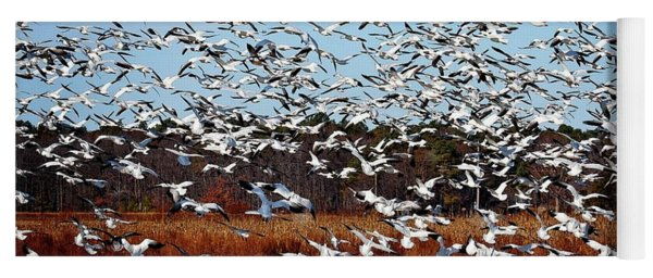 Wintering Snow Geese Yoga Mat