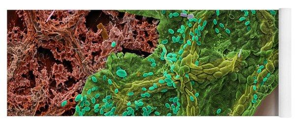 Diatoms Eating A Maple Leaf Yoga Mat