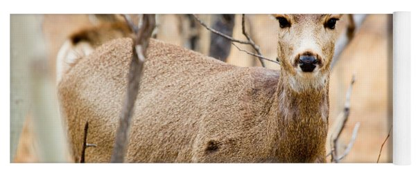 Mule Deer In The Pike National Forest Yoga Mat