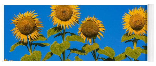 Field Of Sunflowers Yoga Mat