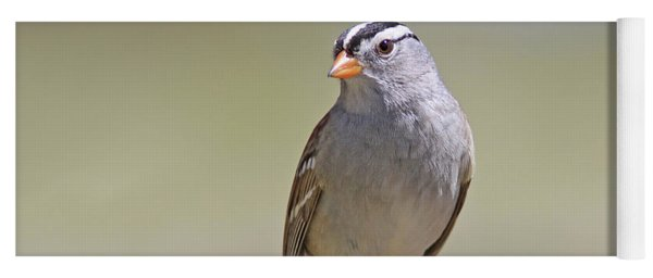 White-crowned Sparrow Yoga Mat