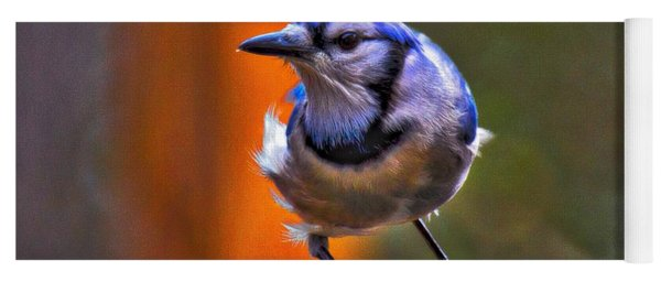 Yoga Mat featuring the photograph Bluejay by Robert L Jackson