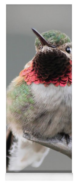 Broad-tailed Hummingbird Yoga Mat