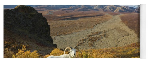 Dalls Sheep In Denali Yoga Mat