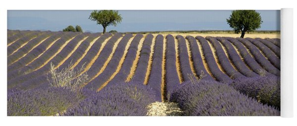 Field Of Lavender. Provence Yoga Mat