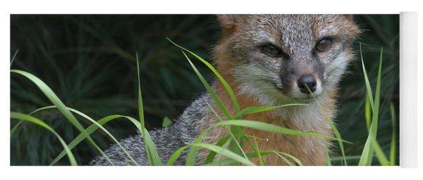 Gray Fox In The Grass Yoga Mat