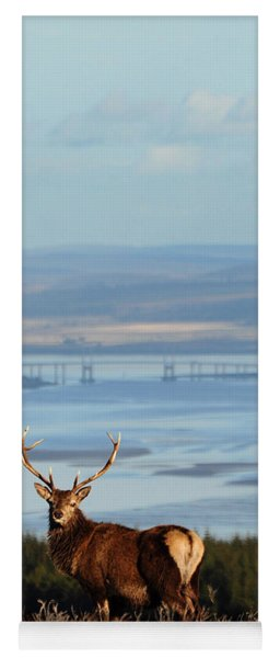 Stag Overlooking The Beauly Firth And Inverness Yoga Mat