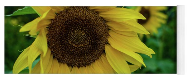 Sunflower Fields Yoga Mat