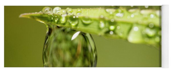 Water Drops On The Grass Yoga Mat