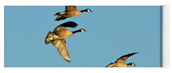 3 Geese In Flight Yoga Mat