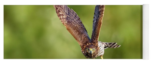 Red-tailed Hawk Yoga Mat