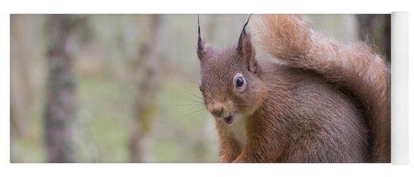 Red Squirrel - Scottish Highlands #8 Yoga Mat