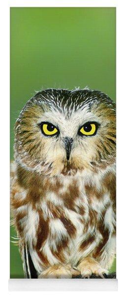 Northern Saw-whet Owl Aegolius Acadicus Wildlife Rescue Yoga Mat
