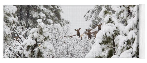 Elk In Deep Snow In The Pike National Forest Yoga Mat