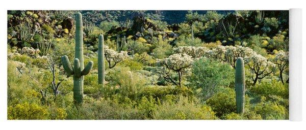 Saguaro Cactus Carnegiea Gigantea Yoga Mat