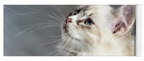 Cat Yoga Mat