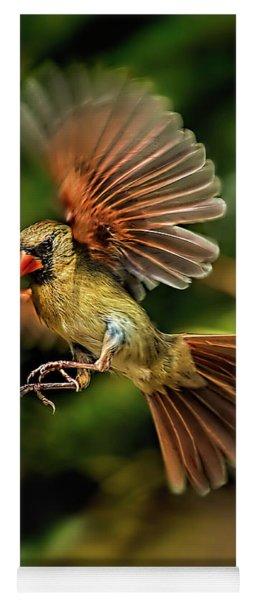 A Cardinal Approaches Yoga Mat