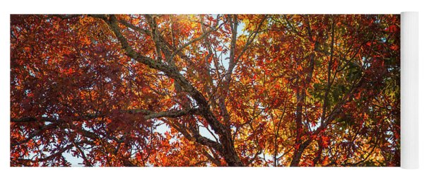 A Colorful Tree In Autumn Yoga Mat