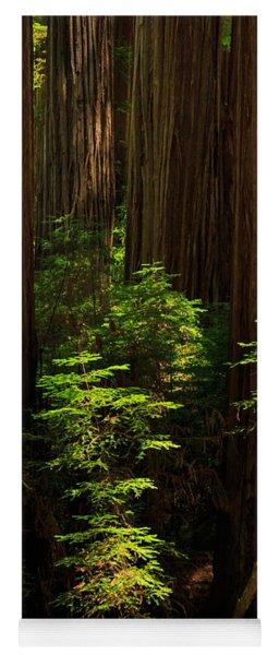 A Deer In The Redwoods Yoga Mat