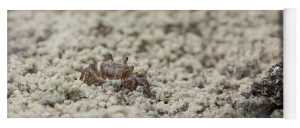 A Fiddler Crab In The Sand Yoga Mat