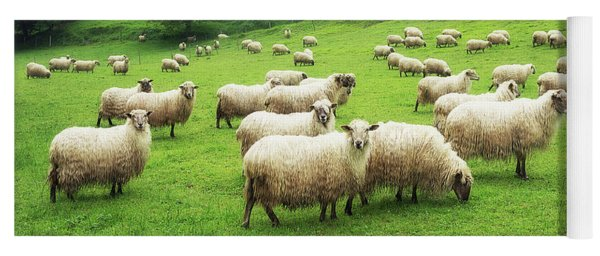 A Flock Of Sheep Yoga Mat